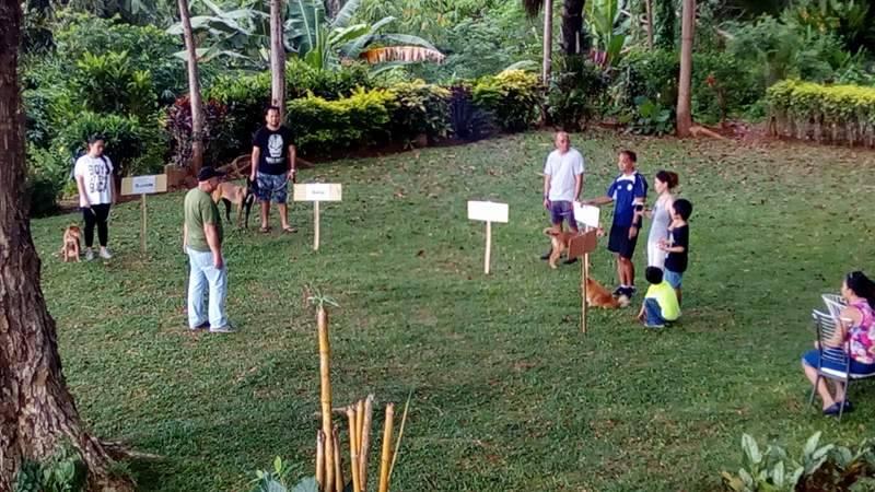 Individual dog training.